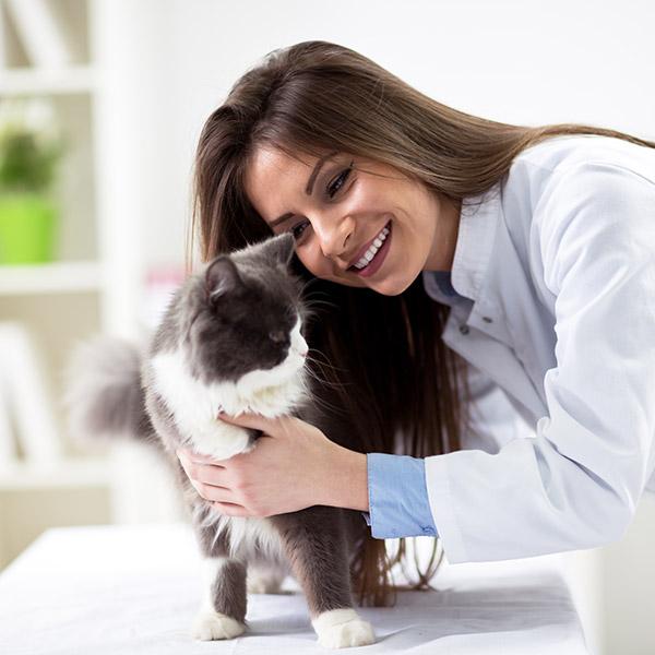 Tierärztin mit Katze